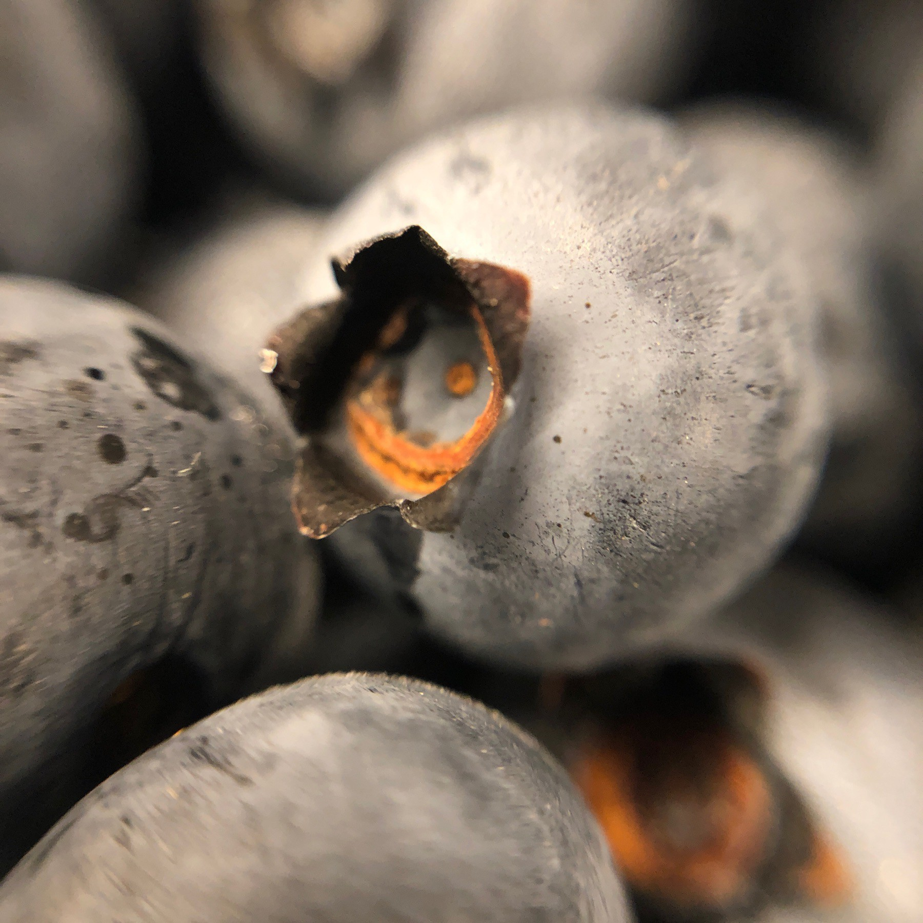 Close up of blueberries.