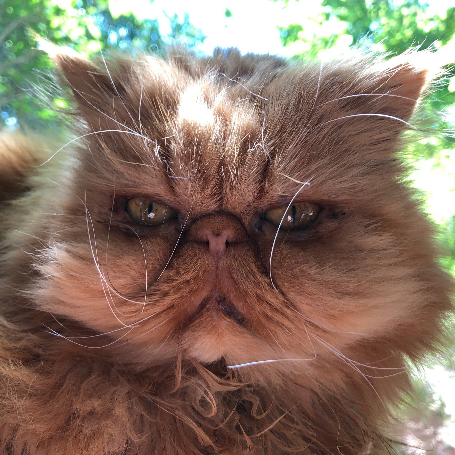 face of a cat