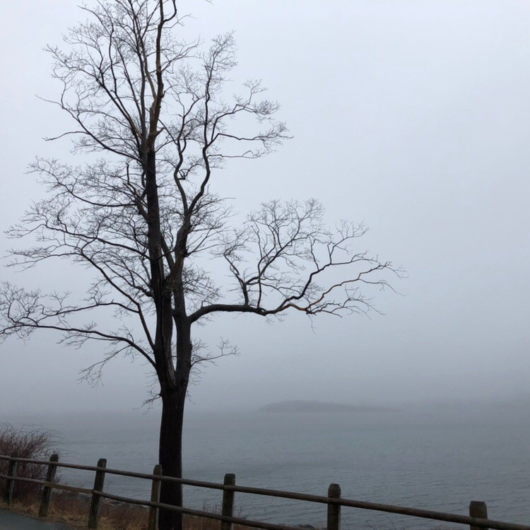 Tree and foggy harbour.