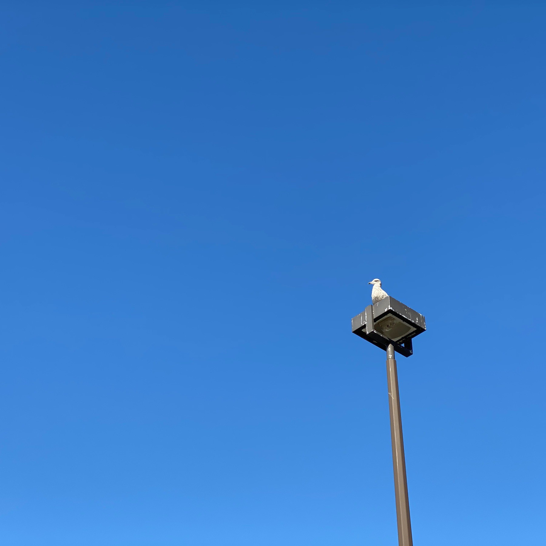 Sky and seagull on light post.