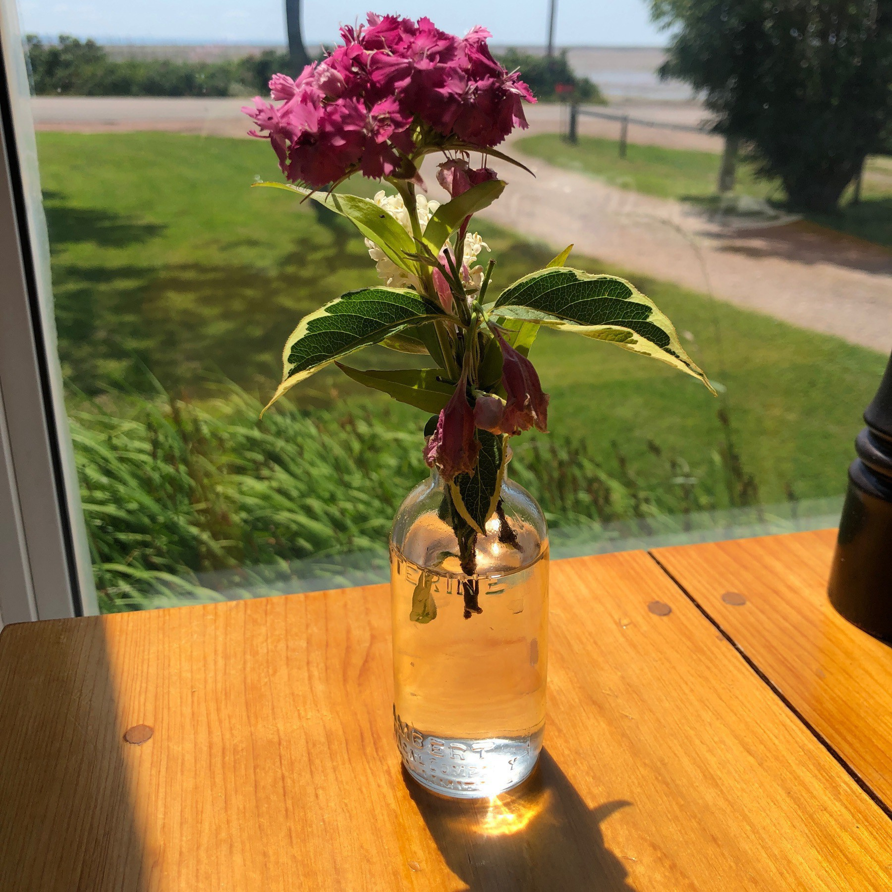 Flower in vase on table in front of window.