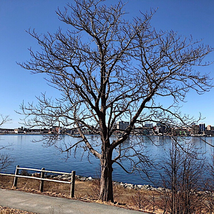 Tree against sky with harbour in distance.