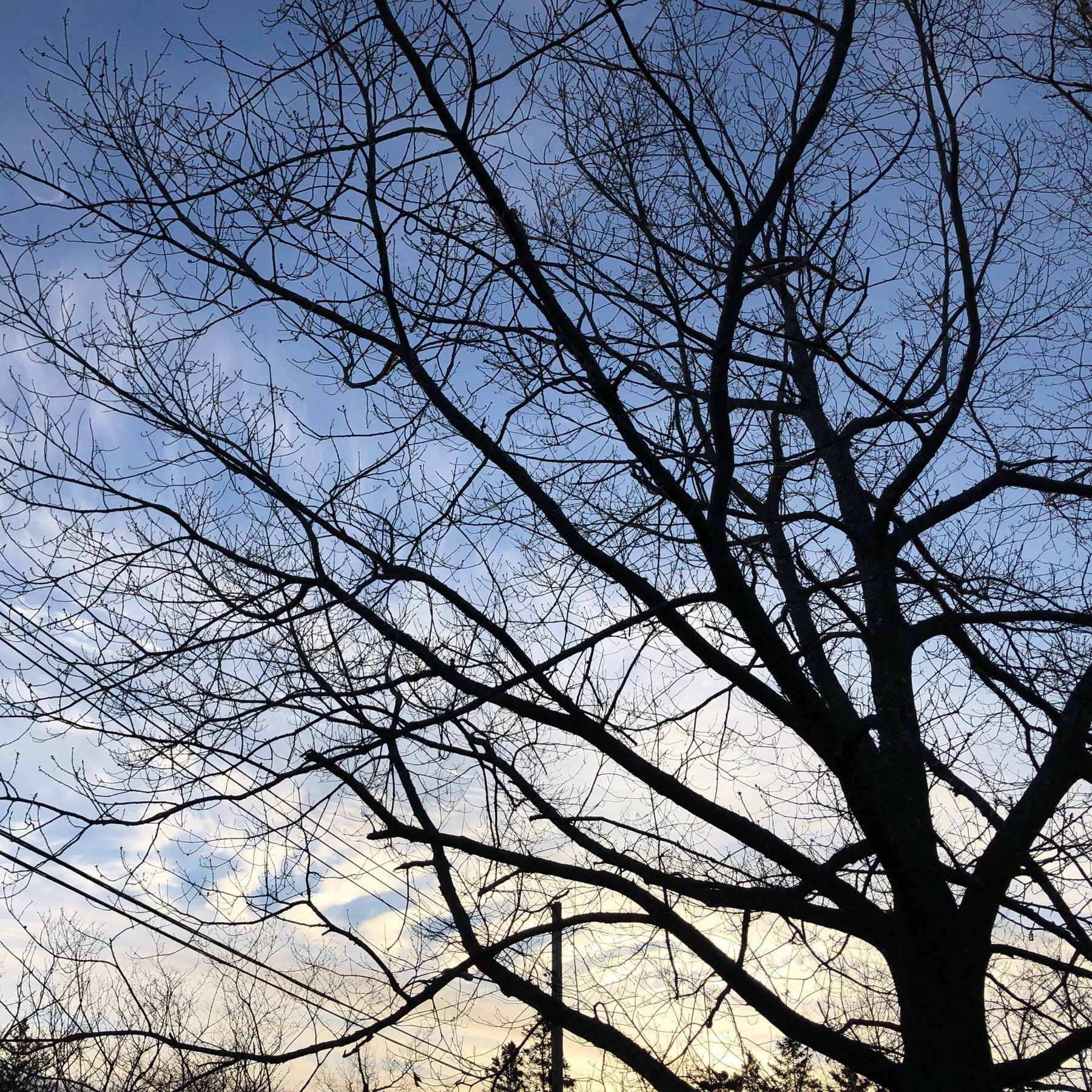 Tree branches and sky.