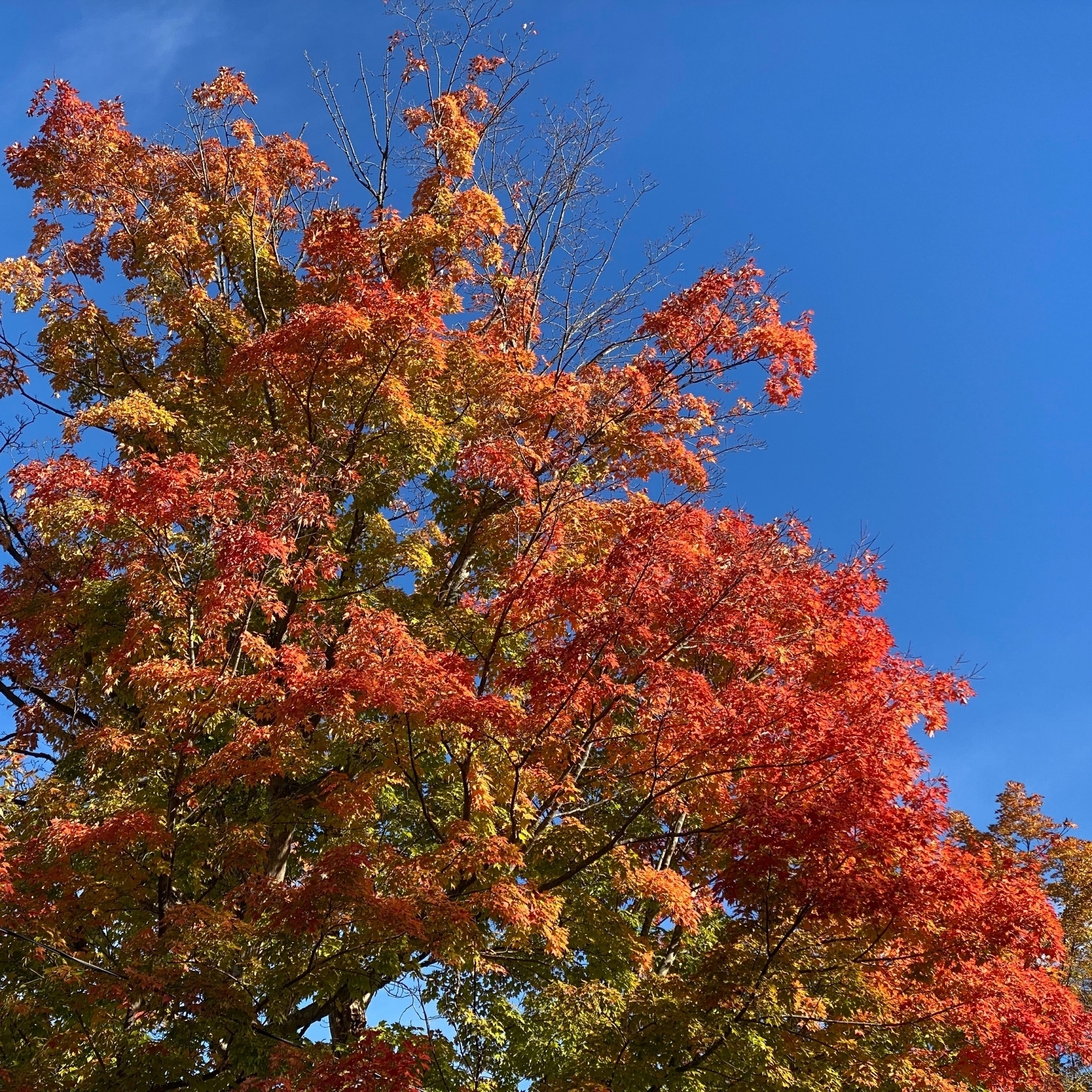 Red leaves on tree against a blue sky.
