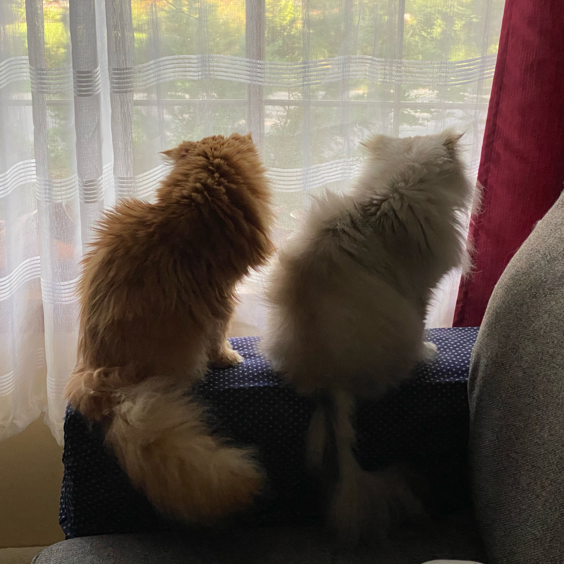 Two cats on the arm of a sofa looking out a window.
