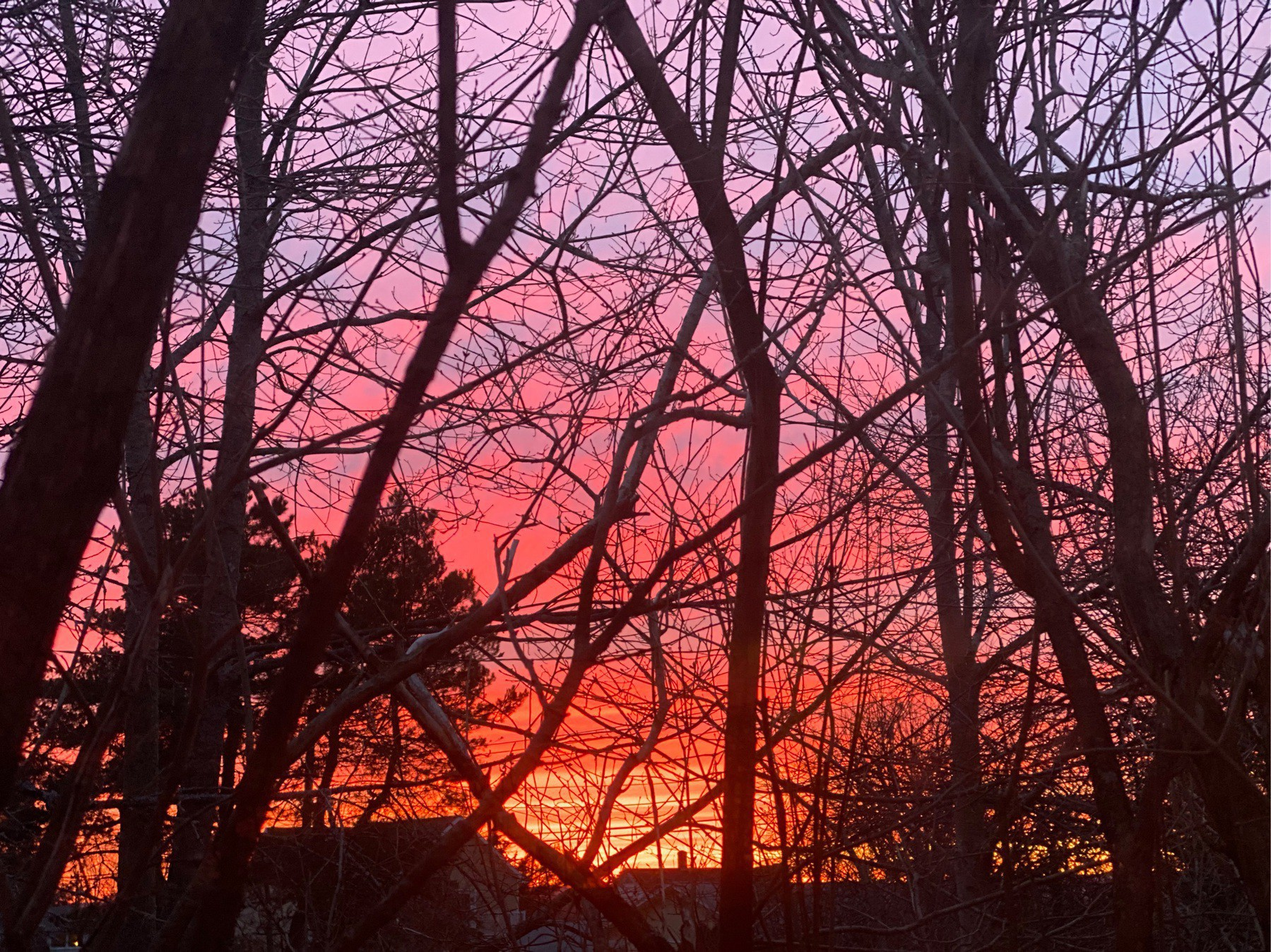 Sunset through branches.