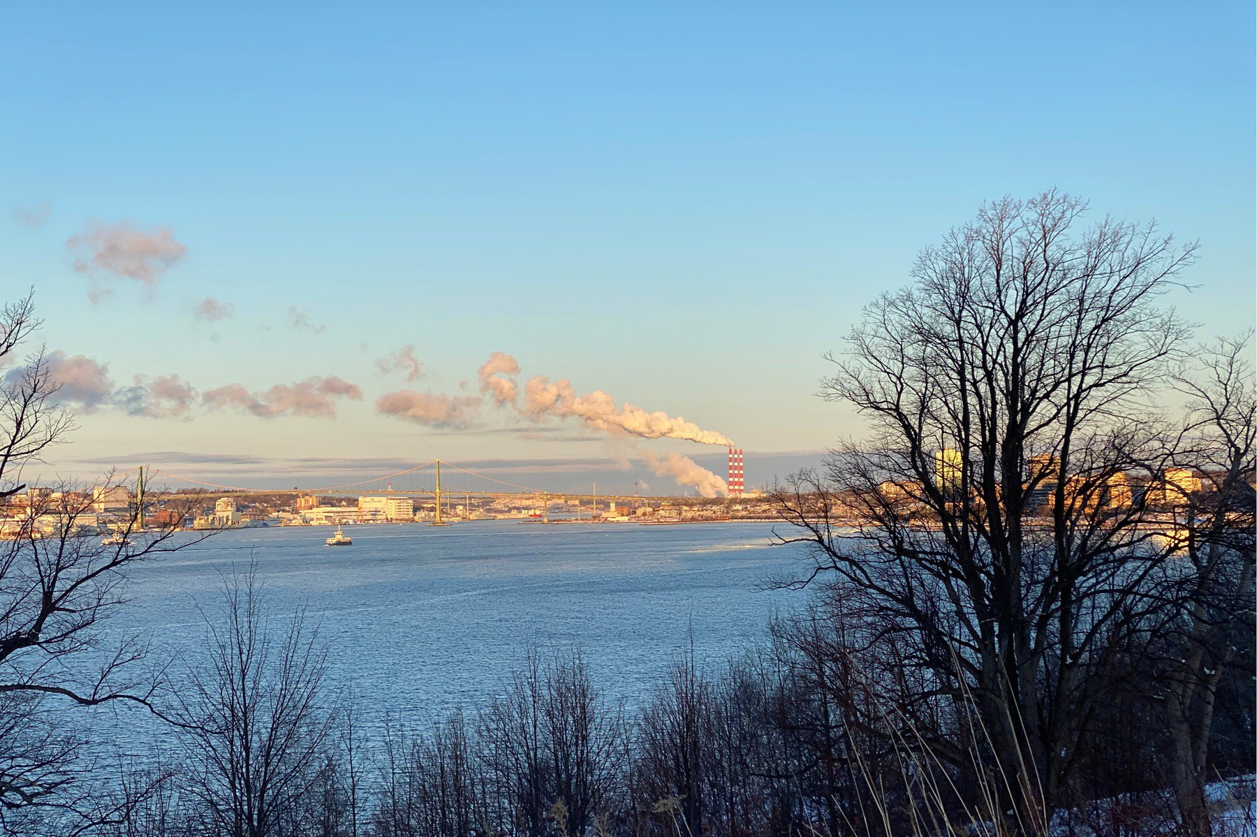 View of Halifax Harbour with trees and morning sky.